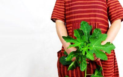 Gemmotherapie: Feigenbaum – bei Stress, Angst & Verdauungsproblemen
