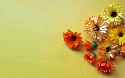 Ringelblume / Calendula: beruhigende Salbe & Tinktur selber machen