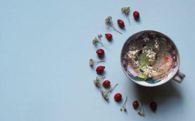 Kräutertee richtig zubereiten – das solltest du unbedingt beachten
