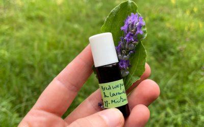 Beruhigender Mückenstich-Roll-On mit Breitwegerich und Lavendel