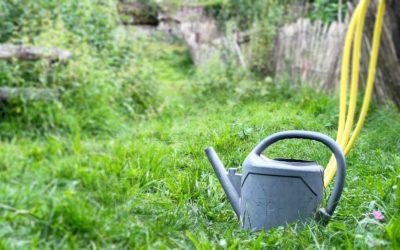 5 Heilkräuter gegen Magen-Darm-Beschwerden für den Garten & Balkon