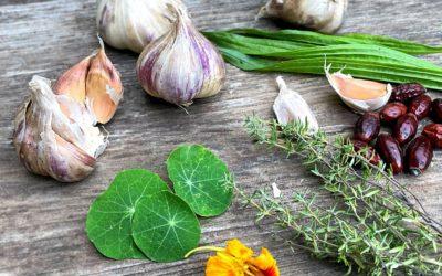 7 Wild- & Heilpflanzen gegen Erkältung und Husten